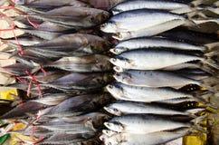 Beaucoup de poissons en mer images stock