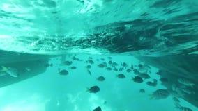 Beaucoup de poissons exotiques nagent sous un bateau dans l'eau transparente de turquoise banque de vidéos