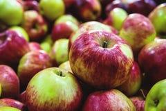 Beaucoup de pommes Images libres de droits