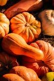 Beaucoup de potirons multicolores, fond décoratif d'automne saisonnier photographie stock libre de droits