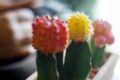Beaucoup de pots colorés par cactus en Clay Pots On Wooden Table images libres de droits