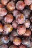 Beaucoup de prunes mûres bleues Images stock