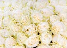 Beaucoup de roses blanches comme fond floral Images libres de droits