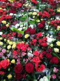 Beaucoup de roses de différentes couleurs photo stock