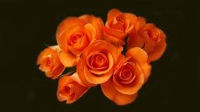Beaucoup de roses oranges dans le groupe Photographie stock libre de droits
