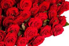 Beaucoup de roses rouges photo libre de droits
