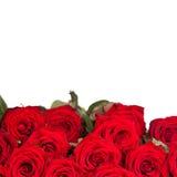 Beaucoup de roses rouges photos libres de droits