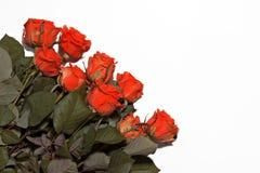Beaucoup de roses rouges sur un fond blanc Images stock