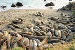 Beaucoup de sceaux à la plage photo stock