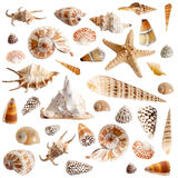 Beaucoup de seashells photographie stock libre de droits