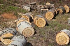 Beaucoup de sections de tronc d'arbre Photographie stock