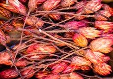 Beaucoup de sugarbush fermé fleurit au marché 2 Photographie stock