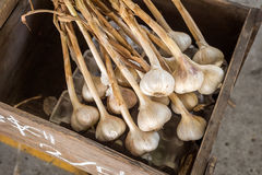 Beaucoup de têtes du séchage d'ail dans une boîte en bois Photo libre de droits