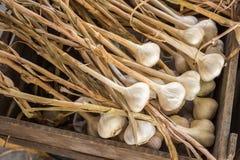 Beaucoup de têtes du séchage d'ail dans une boîte en bois Photos libres de droits