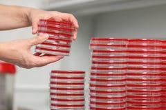 Beaucoup de tasses de PETRA sont sur la table dans un laboratoire médical, plan rapproché Photo libre de droits