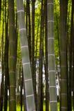 Beaucoup de tiges en bambou, arbres en bambou Photographie stock libre de droits