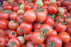 Beaucoup de tomates Photo stock