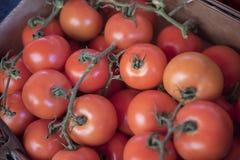 Beaucoup de tomates mûres rouges juteuses Photo stock