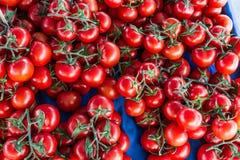 Beaucoup de tomates moyennes Photographie stock libre de droits