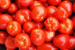 Beaucoup de tomates rouges Photos libres de droits