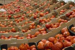 Beaucoup de tomates rouges dans des boîtes dans le magasin Photographie stock libre de droits