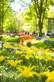 Beaucoup de tulipes jaunes et de beaux lits de fleur Parc avec des fleurs Keukenhof au printemps holland Cadeau de carte postale images stock