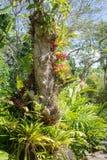 Beaucoup de types d'epiphyte tropical plante l'élevage sur un tronc d'arbre Photos stock