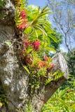 Beaucoup de types d'epiphyte tropical plante l'élevage sur un tronc d'arbre Photo stock