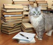 Beaucoup de vieux livres et chat Photographie stock libre de droits
