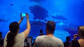 Beaucoup de visiteurs dans le grand aquarium clips vidéos