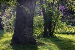 Beaucoup et différentes plantes ornementales images stock