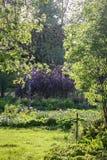 Beaucoup et différentes plantes ornementales photographie stock libre de droits
