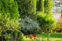 Beaucoup et différentes plantes ornementales photo stock