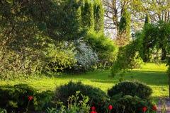Beaucoup et différentes plantes ornementales photographie stock