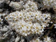 Beaucoup jaillissent des fleurs Photo libre de droits