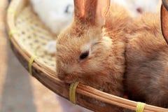 Beaucoup lapins à vendre Images stock