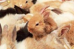 Beaucoup lapins à vendre Photo stock