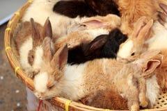 Beaucoup lapins à vendre Photo libre de droits