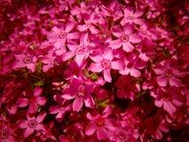 Beaucoup le beau rose fleurit le fond/papier peint photos stock