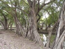 Beaucoup le regard d'arbre aiment en tant que seulement un Vue de largeur photo stock