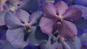Beaucoup orchidea violet bleu, illustration réglée du fond 3d de fleur d'orchidée Images libres de droits