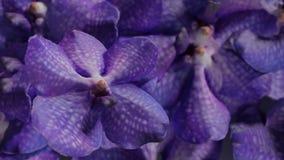 Beaucoup orchidea violet, illustration réglée du fond 3d de fleur d'orchidée Image stock