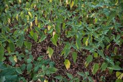 Beaucoup ortie de vert forêt Photos stock