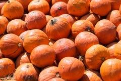 Beaucoup récolte de Halloween de fruit de potiron Image stock