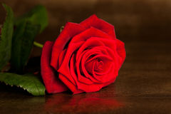 Beaucoup rose rouge images stock