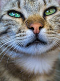 Beaufiful little cat Royalty Free Stock Images