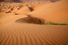 Beaufsichtigen Sie die Wüste lizenzfreie stockbilder
