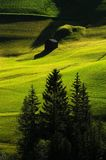 Beauful scene in Dolomites, Alta Badia, green hills with fir and larch Stock Photography