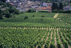 Beaujolais Stock Photography