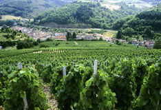 Beaujolais Stock Photo